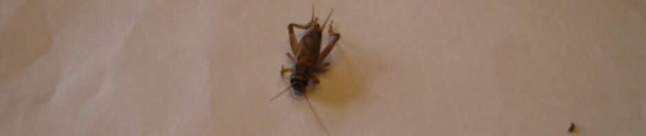 crickety_h