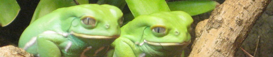 Waxy Monkey Frogs