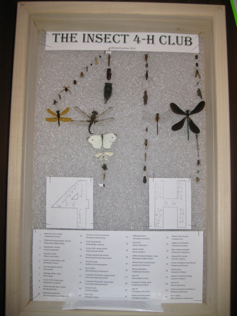 The Insect 4-H Club, full view