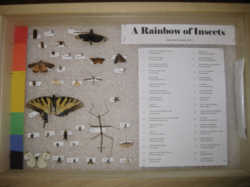 A Rainbow of Insects